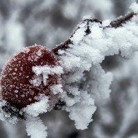 Зарисовки зимы (2) :: Виталий Павлов