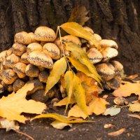 городские грибы :: Октябрина ---