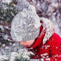 Вкусная зима. :: Екатерина Савёлова