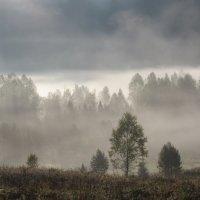 Сколько чудес за туманами кроется. :: MaOla ***
