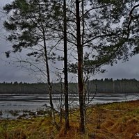 Лесное озеро :: Vladimir Semenchukov