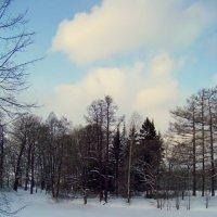 Повеяло  весной :: Miko Baltiyskiy