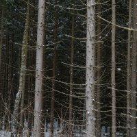 Зимний лес :: Ирина Бруй