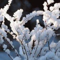 Белый снег пушистый :: Swetlana V
