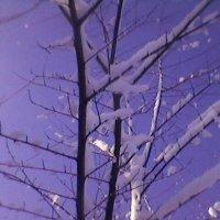 Декабрь :: Миша Любчик