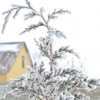 А снег идет, деревья укрывает... :: Александр