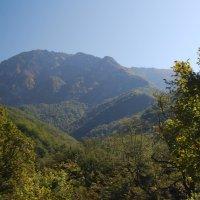Горы Абхазии. :: Нелли *