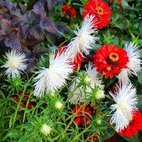 Осенние цветы :: Милешкин Владимир Алексеевич