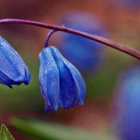 Немного о весне зимой... :: Александр Резуненко
