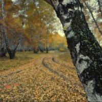 листья :: Виктор Сосунов