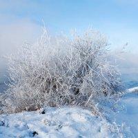 Иней, снег и мороз :: Анатолий Иргл