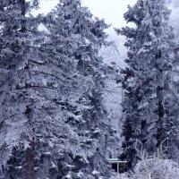 Зимнее волшебство... :: Тамара (st.tamara)