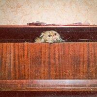Котя вылазит из пианино :: Аннушка Гущина