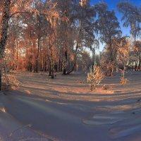 Околдован лес стоит, чудной жизнью он блестит 10 :: Сергей Жуков