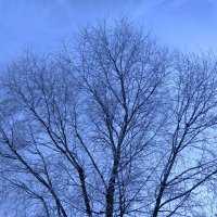 Морозный день :: Аlexandr Guru-Zhurzh