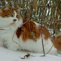 Портрет в зимнем интерьере... :: BoykoOD