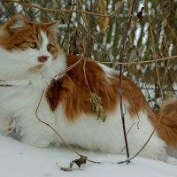 Портрет в зимнем интерьере... :: Александр Бойко
