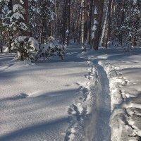 Уже тропой гордится зимник... :: Лесо-Вед (Баранов)