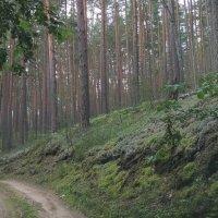 Дорога в лесу :: Tanja Gerster