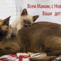 Для милых Мам! :: Shmual Hava Retro