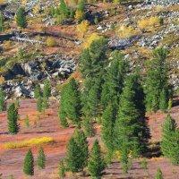 На склонах гор Саянских в сентябре :: MaOla ***
