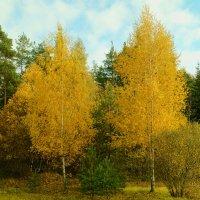 окраина леса :: владимир володенок