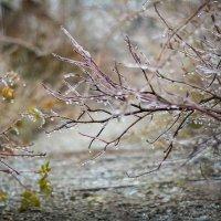 природа скованная льдом :: Дарья Семенова