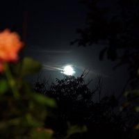 ....так дышат розы, под лунный покров, поют они нам о любви... :: Сергей Андриянов