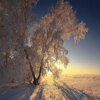 Околдован лес стоит, чудной жизнью он блестит 14 :: Сергей Жуков