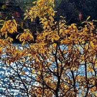 Осень... :: вадим измайлов