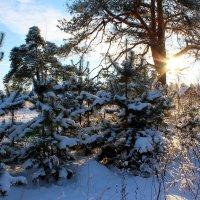 В зимнем лесу :: Милагрос Экспосито