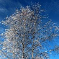 В морозный день :: Катя Бокова