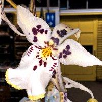 Орхидея :: Alexander Dementev