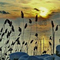Зима на озере :: Vladimir Lisunov
