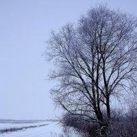 Зимняя  тишина... :: Валерия  Полещикова