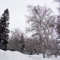 Зима! :: раиса Орловская