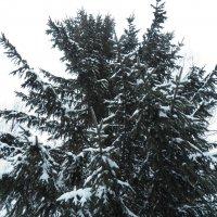 Зима в небесах :: Регина Пупач