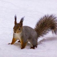 На снегу :: Александр