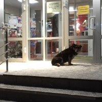 В ожидании хозяина . :: Мила Бовкун