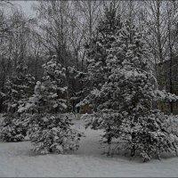 елки в снегу :: Юлия Денискина