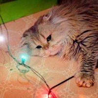 новогодняя котя :: Аннушка Гущина