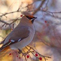 Нарядная птица :: Анатолий Иргл