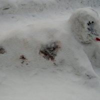 Снежный пёс :: Дмитрий Арсеньев