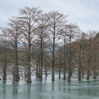Кипарисы озера  Сукко :: Андрей Майоров