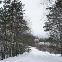 Это сохранившаяся часть старой дороги, по которой в июне 1941 г уходили на войну жители д. Бетково :: Елена Павлова (Смолова)