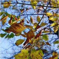 Осень в цвете :: Bob Blow