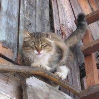 Кошка :: Maikl Smit