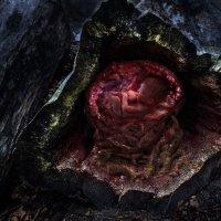 лесной плод. :: Leo Belov