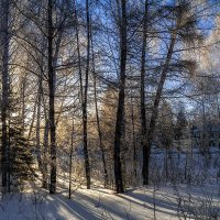 Зимнее солнце. 2. :: Vadim Piottukh