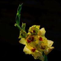 А я дарю тебе цветы! :: Владимир Максимов